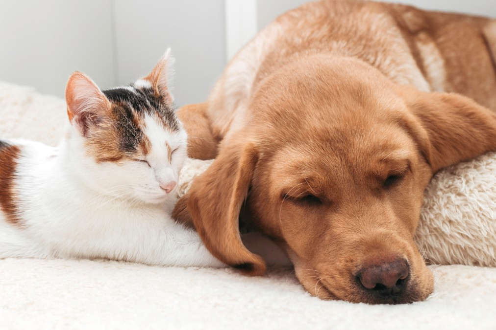 Pet friendly cleaning products